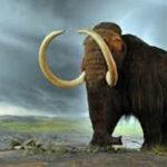 España: Estudio desvela por qué eran tan grandes los mamuts y otros herbívoros