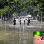 Declaran emergencia sanitaria por dengue en región fronteriza con Ecuador