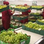Agroexportaciones con valor agregado llegaron a 99 mercados