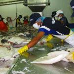 TLC de Perú con Unión Europea impulsó generación de empleo