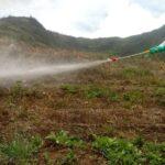 SENASA mantiene bajo control plaga de langostas en Andahuaylas