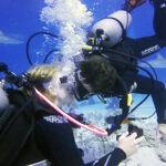 Le propuso matrimonio a su novia rodeados de tiburones (Video)
