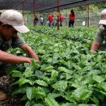 Banco Mundial: Sector agrícola peruano creció 3,3% durante última década
