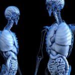 Descubren una característica hasta ahora desconocida de la anatomía humana