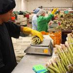 Macrorregión Nor Oriental podría exportar alimentos por casi US$ 7 mil millones