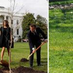 EEUU: Desapareció de la Casa Blanca el roble que el presidenteMacron regaló a Trump (VIDEO)