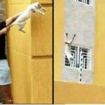 Venezuela: Expulsan a dos futbolistas que se grabaron torturando y arrojando de edificio a gato
