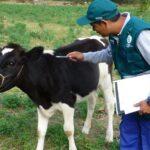 MINAGRI instruye a 928 productores pecuarios de Apurímac en control de la rabia