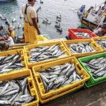 Sociedad Nacional de Pesquería hace precisiones sobre la ley de cuotas de pesca