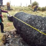 Queman 1.000 plantas de amenazada Puya Raimondi en Puno