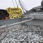 Produce: Volumen de pesca creció 151% en abril alentado por la anchoveta
