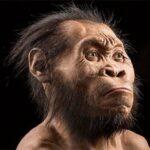 El Homo naledi, un hominido de cerebro pequeño, pero similar al nuestro