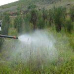Apurímac: Productores organizados controlan plaga de langostas en Huayllati