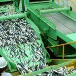 Produce autoriza segunda temporada de pesca de anchoveta en zona sur