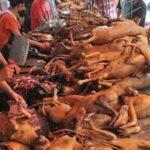 Miles de personas piden en China el fin del festival anual de carne de perro