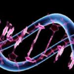 Suiza: Creancircuito genético sintético que regula la glucosa en diabéticos de tipo 2