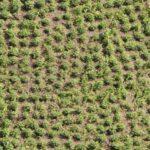Cultivo de coca en Colombia alcanzó cifra récord de 209.000 hectáreas en 2017