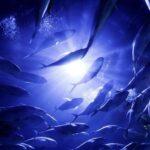 Descubren gran cantidad de retrovirus en peces, anfibios y reptiles