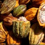 Perú iniciará promoción del cacao en Rusia