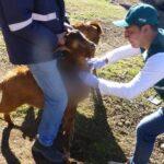 MINAGRI actualizará información de presencia de Brucelosis caprina en Apurímac