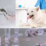 EEUU: Una cura contra pulgas en mascotas podría prevenir zika y malaria en humanos