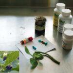 Científicos comprueban eficacia contra cáncer de próstata de la planta Belladona