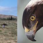 Kirguistán: Niña de 8 años fue atacada por un águila real durante un festival (VIDEO)