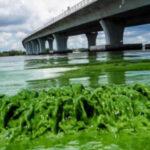 EEUU: Gobernador declara emergencia en 7 condados de Florida por alga tóxica (VIDEO)