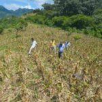 El Salvador declara alerta roja en 143 municipios por sequía extrema