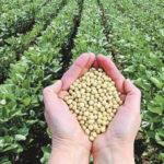 EEUU: Guerra comercial afecta a tres estados productores de soja que vendían a China