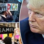 EEUU: Juez federal ordena a la Administración Trumpla completa restauración de DACA (VIDEO)