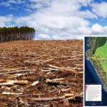 Amazonía peruana pierde 23,000 hectáreas de bosques en 1er semestre