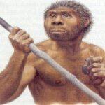 La pereza ayudó a la extinción del Homo erectus, según estudio