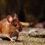 Dispositivo para el cerebro puede frenar convulsiones de epilepsia en ratones