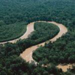 Revelan que ríos amazónicos mantienen un papel crucial de diversidad aviar