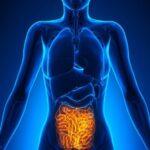 Diseñan sistema emulador portátil para tratar trastornos digestivos