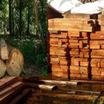 Osinfor: Detectan 141,000 m³ de presunta tala de madera ilegal en la Amazonía