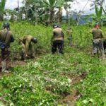 Perú al erradicar cultivos evitó producción de 240 toneladas de cocaína en 2017