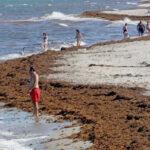 EEUU: Cierran playas en Palm Beach ante peligro de temibles algas venenosas