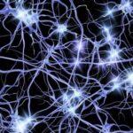 Científico dice si cerebro generase nuevas neuronas se perderían recuerdos