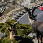 """ONU: Pérdida de biodiversidad es un """"asesino silencioso"""" sin marcha atrás"""