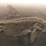 Ciencia: Hallan restos de piel de un reptil marino de hace 180 millones de años
