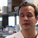 """Científicos hallan un """"Reloj"""" inmune controla las infecciones y la enfermedad cardiovascular"""