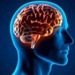 Ingenieros en EEUU logran convertir señales cerebrales en habla