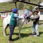 SENASA intensifica acciones para mantener la rabia bajo control en Apurímac