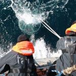 Ciencia: Científicos internacionales identifican cerca de 200,000 especies de virus marinos