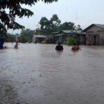 Pucallpa: Reportan animales silvestres en calles debido a lluvias intensas (VIDEO)