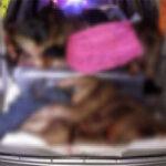 ¡Horror!: Dejan camioneta con ocho cadáveres en México