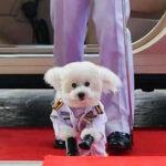 El nuevo rey de Tailandia nombró mariscal a su perro Fufú