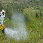 SENASA y productores de Cotabambas unen esfuerzos contra plaga de langostas